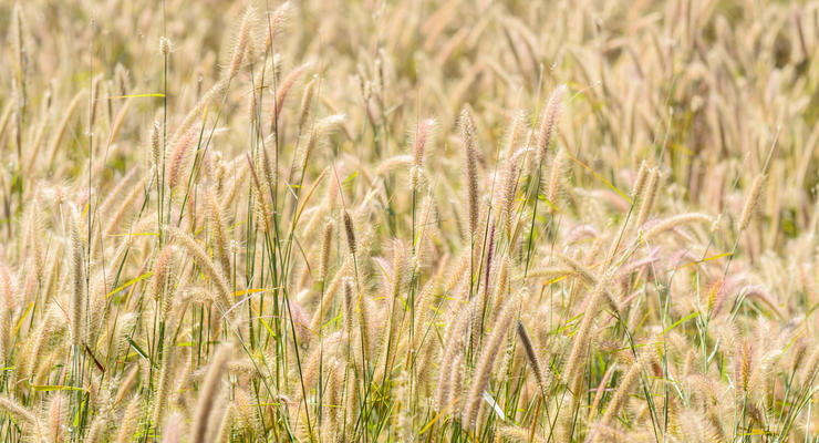 НДС для аграриев предлагают существенно снизить: Подробности
