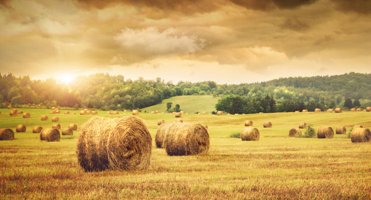 Прогноз урожая зерновых снова снижен: Что случилось