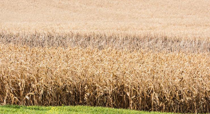 Шмыгаль: Урожай зерновых в этом году уменьшится на 7 млн тонн