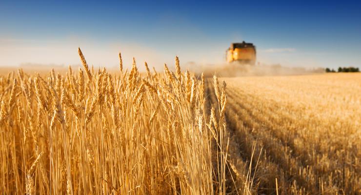 НБУ: Гривну может укрепить продажа нового урожая зерна