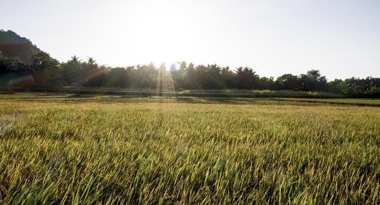 Глава Госгеокадастра: Государственных сельхозземель почти не осталось