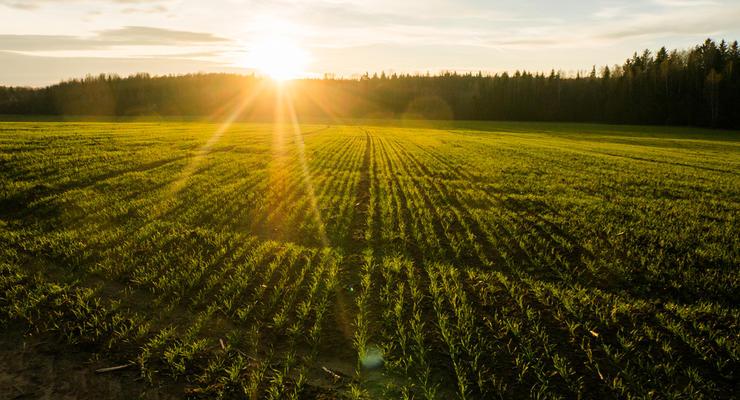 Рынок земли в Украине 2021: Сколько будет стоить гектар