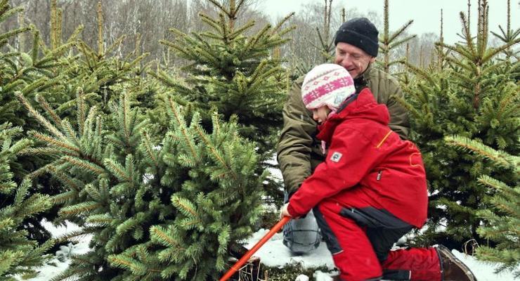 Сколько будет стоить елка на Новый год в Украине: Известны цены