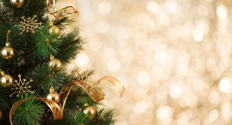Как обманывают украинцев при покупке новогодних елок: Что происходит