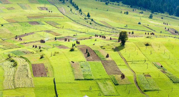 Цена украинской земли в 2021 году: В Минагрополитики озвучили цифру