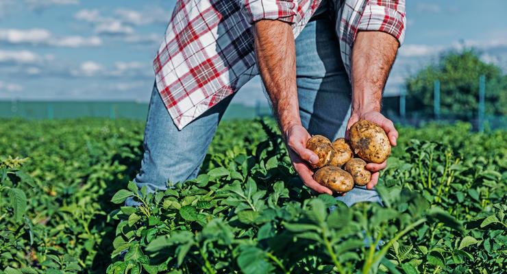 Производство сельхозпродукции в Украине снизилось на 5%