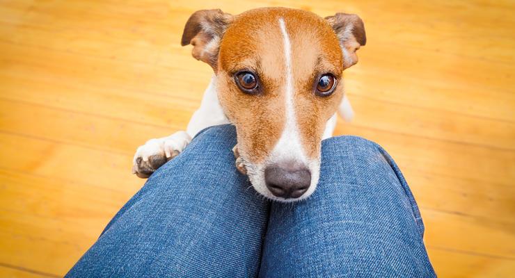 Как перевозить собаку в поезде: Озвучены правила