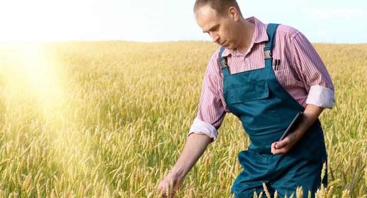 В Украине планируют ввести единый налог на гектар земли: Кого коснется