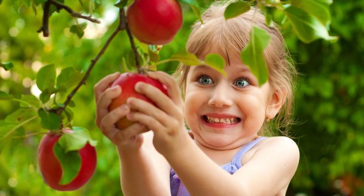 Цены на яблоки в Украине: Эксперт спрогнозировал стоимость до конца года