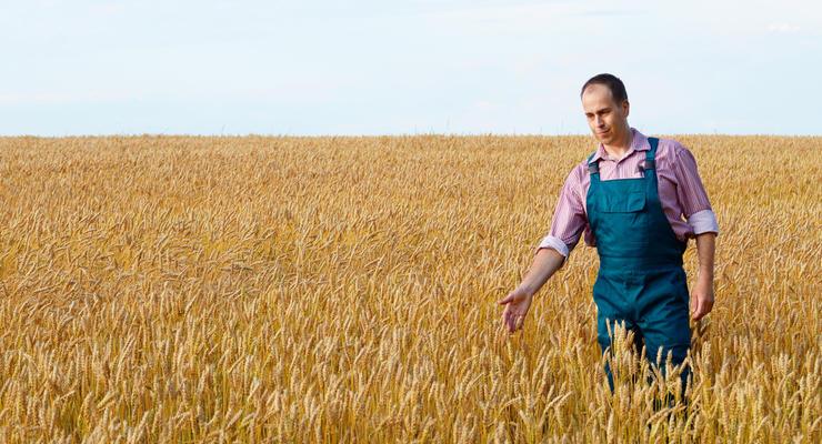 Все украинцы обязаны платить налоги на землю: в Минюсте рассказали, сколько и как